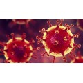 Covit-19 / Coronavirus Rapid Test Kit